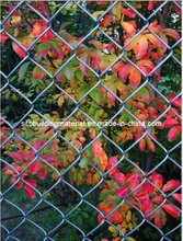 Chain Link Fence/Wire Mesh Fence/Sports Field Fence